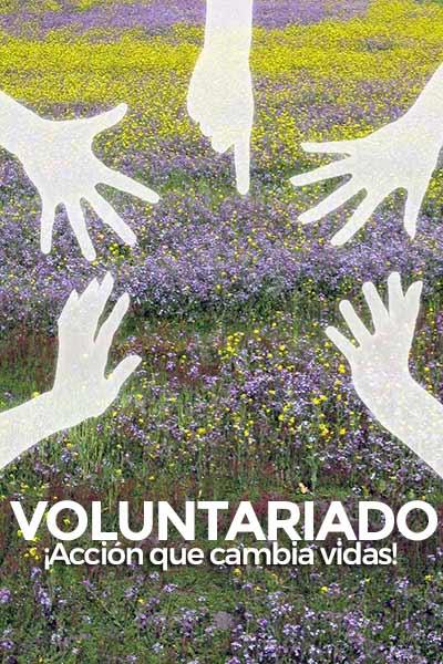 fundacion-mariana-de-jesus-valores-voluntariado-accion